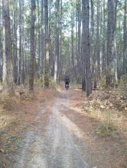 SamHoustonNationalForest